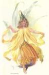 The Daffodil