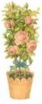Pink Rose Pot