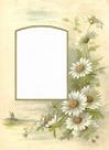 White Daisy Mount